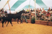 Horse Sale - Peg and Pole Marquee